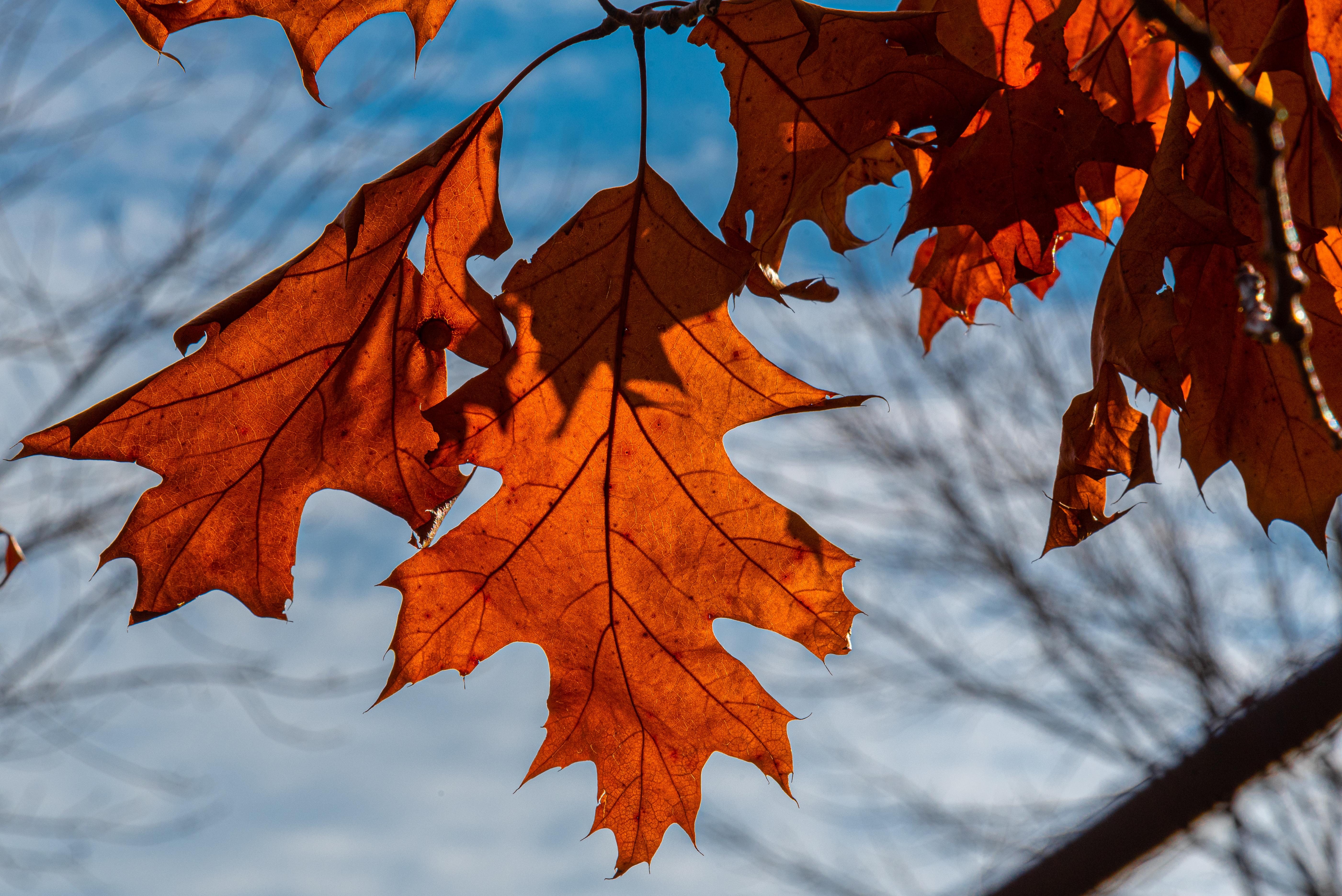 2020-11-09-Fall-2576